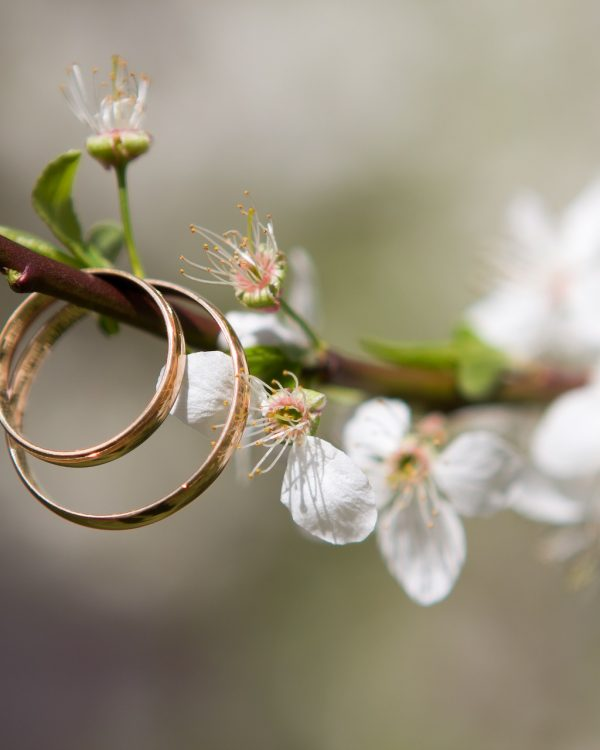 wedding rings on blossom branch