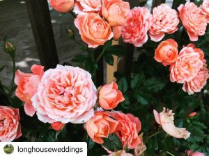 longhouse mill on the brue pink roses instagram somerset wedding